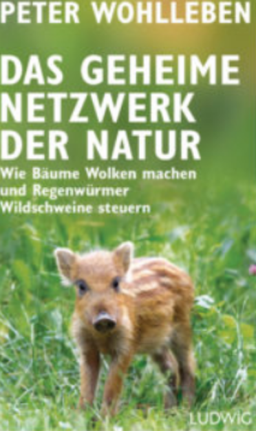 Bild von WOHLLEBEN Das geheime Netzwerk der Natur