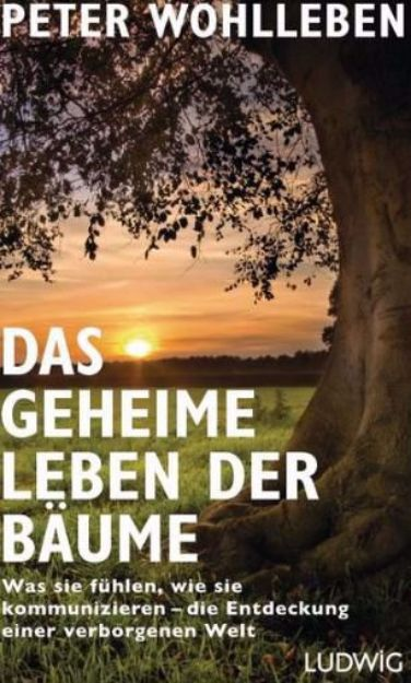 Bild von WOHLLEBEN Das geheime Leben der Bäume